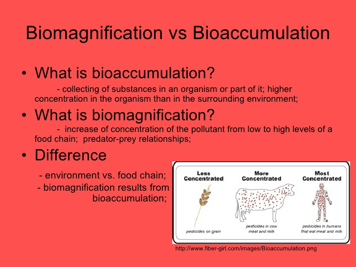 biomagnification lab report essay Our lab report writings prove our proficiency we have understood the fact that it is not easy to write a paper on some scientific theory besides, many of the students feel quite bored, while dealing with the intricate matters of science.